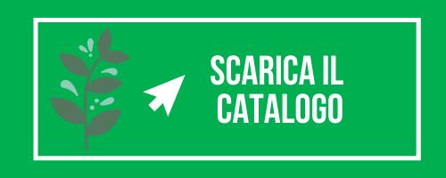 download catalogo