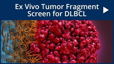 Ex vivo tumor fragment Screen for DLBCL