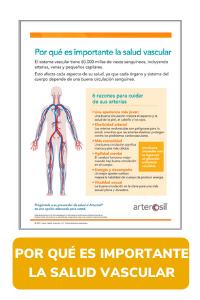 Por Qué es Importante la Salud Vascular