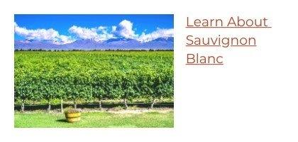 Learn About Sauvignon Blanc Wine