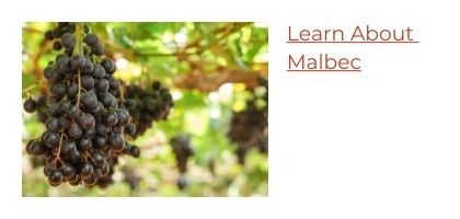 Learn About Malbec Wine