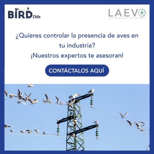 Contacta a un experto BirdChile