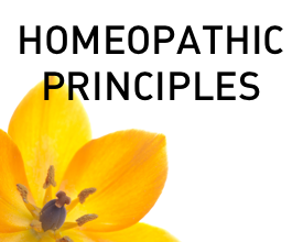 Homeopathic Principles of Brauer Natural Medicine