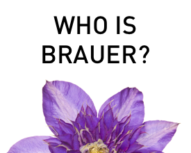 Who is Brauer Natural Medicine?