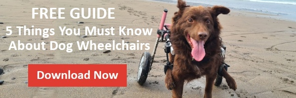 Free guide 5 things you need to know before you buy a dog wheelchair