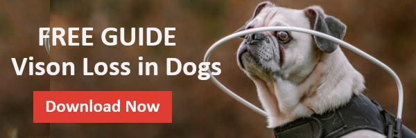 Download eBook Vision Loss in Dogs