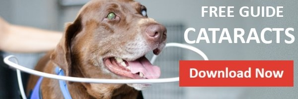 Free Resource Guide for Cataracts in Dogs