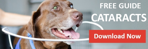 Download Guide Cataracts in Dogs