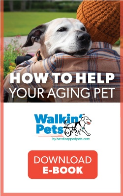 Free Guide on How to Help Your Aging Dog