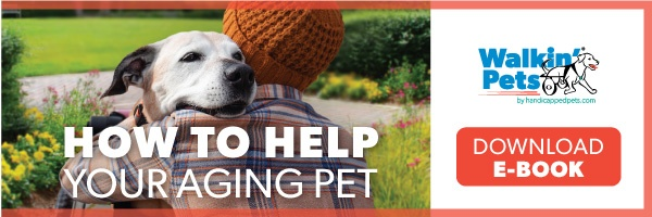 Pet Parent's Guide on How to Help Your Aging Pet