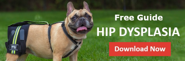 Canine Hip Dysplasia Guide