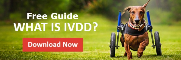 IVDD Guide
