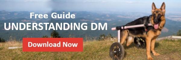 Understanding DM Guide