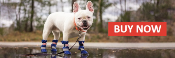 All Weather Boots for pets