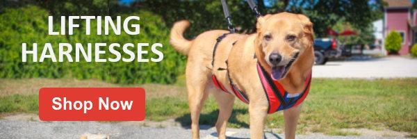 Buy a support harness or lifting harness for dog mobility loss