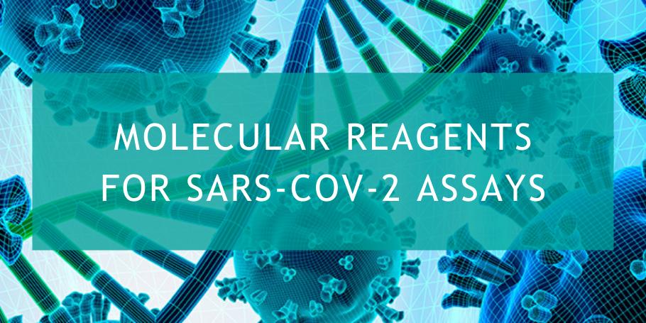 Molecular Reagents for SARS-CoV-2 Assays