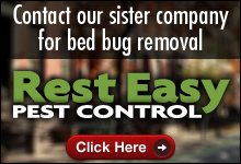 Bed Bug Consultation
