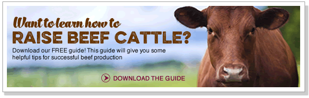 Want to learn how to raise beef cattle?