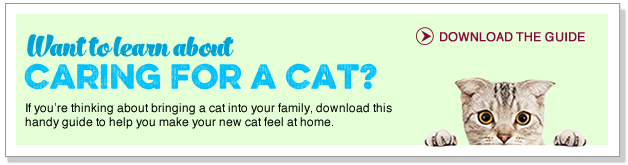 Want to learn about caring for a cat?