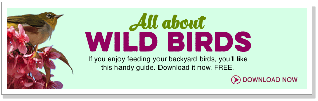 All about wild birds.