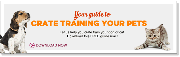 Your guide to crate training your pets