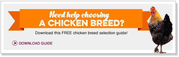 Need help choosing a chicken breed? Download our FREE guide!