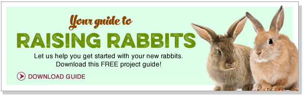 Your guide to raising rabbits.