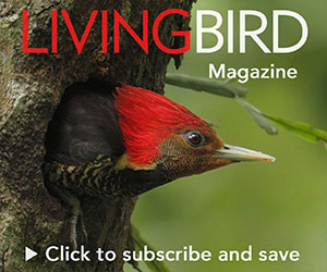 subscribe to Living Bird magazine