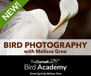 Bird Academy Photography course (permanent)