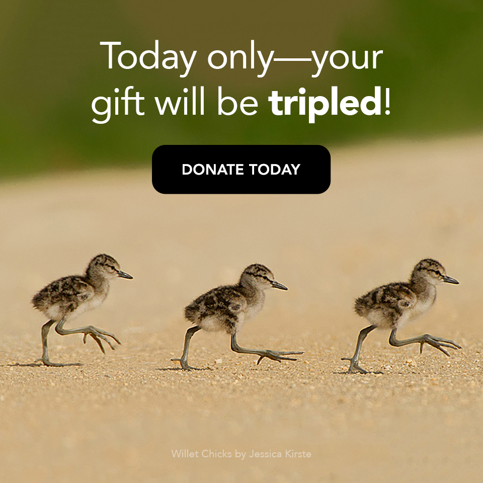 Your gift will be matched! Donate Now
