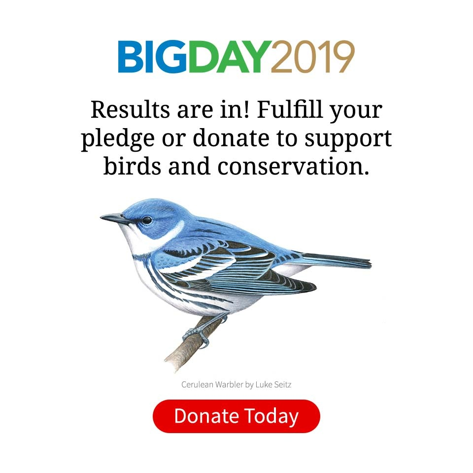 Search, All About Birds, Cornell Lab of Ornithology