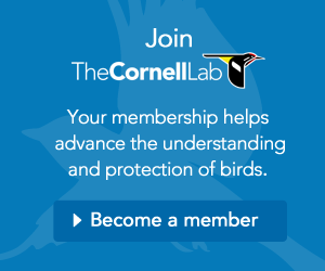Join the Cornell Lab
