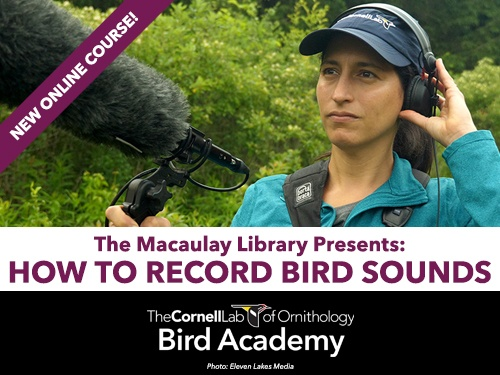 Learn How to Identify Bird Songs: A New Self-paced Course. Click to Learn More