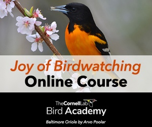 New self-paced course: Learn How to Identify Bird Songs, Click to Learn More