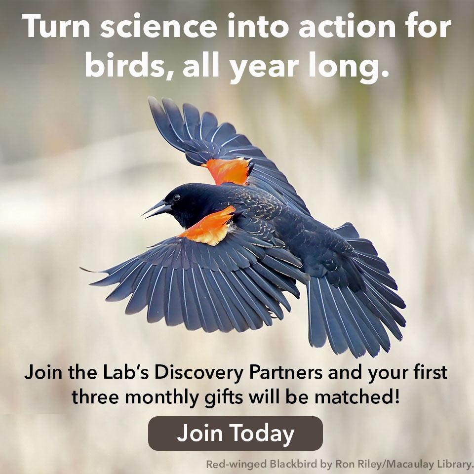 Turn science into action for birds all year long. Join Today!