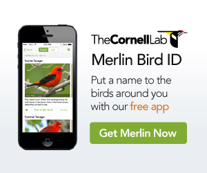 Get Merlin Bird ID