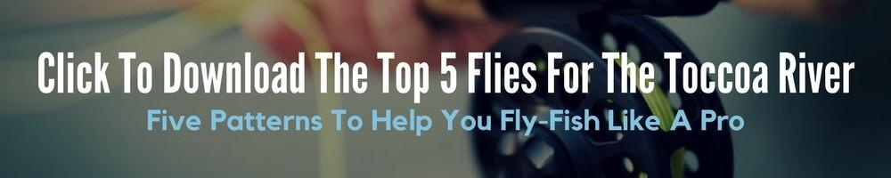 Fly Fishing Top 5 Flies For The Toccoa River
